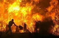 Катастрофические пожары в Португалии